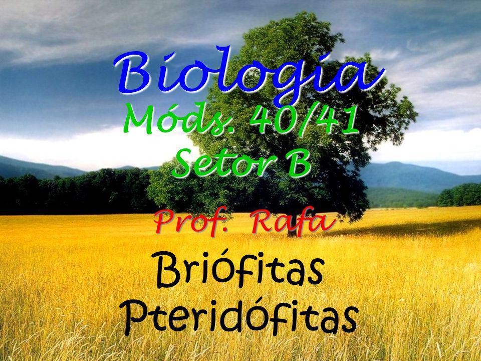 Briófitas Pteridófitas Biologia Prof. Rafa Móds. 40/41 Setor B
