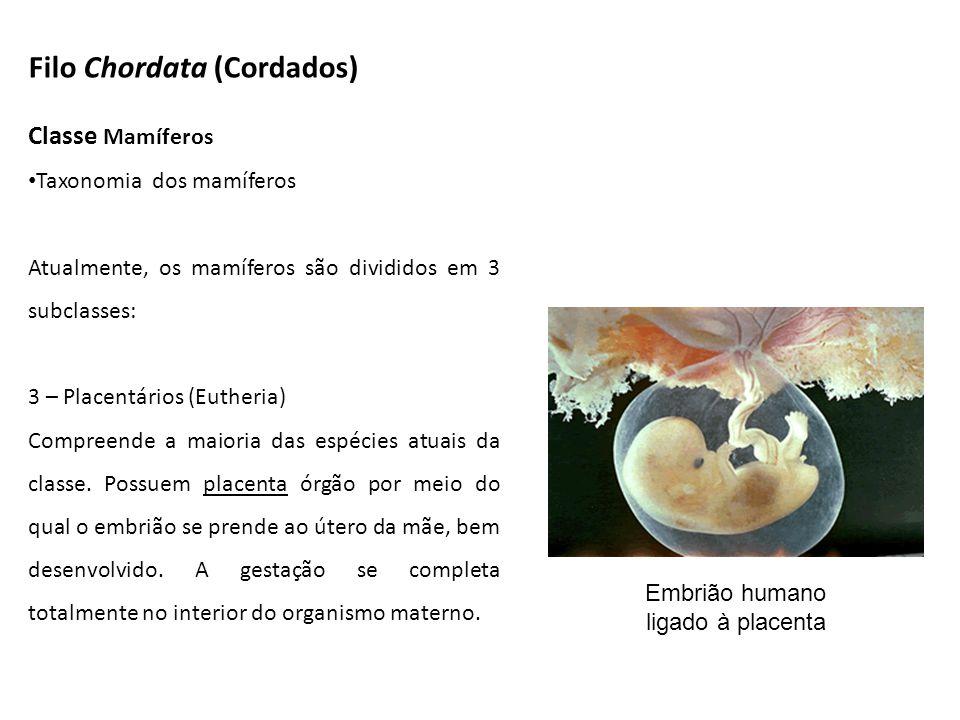 Classe Mamíferos Taxonomia dos mamíferos Atualmente, os mamíferos são divididos em 3 subclasses: 3 – Placentários (Eutheria) Compreende a maioria das