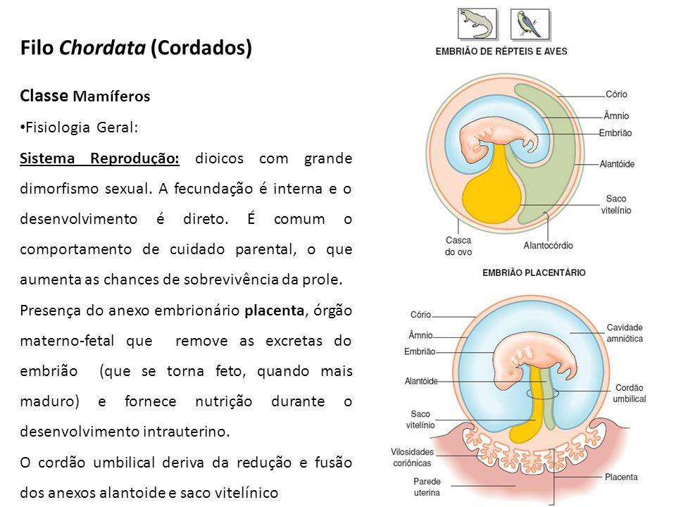 Filo Chordata (Cordados) Classe Mamíferos Fisiologia Geral: Sistema Reprodução: dioicos com grande dimorfismo sexual. A fecundação é interna e o desen