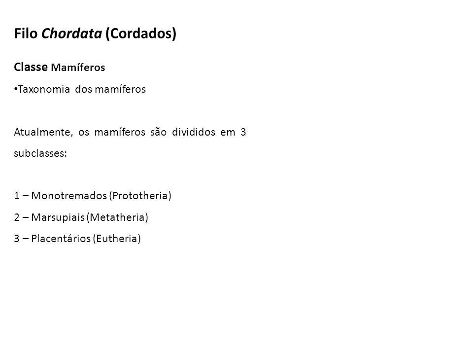Filo Chordata (Cordados) Classe Mamíferos Taxonomia dos mamíferos Atualmente, os mamíferos são divididos em 3 subclasses: 1 – Monotremados (Prototheri