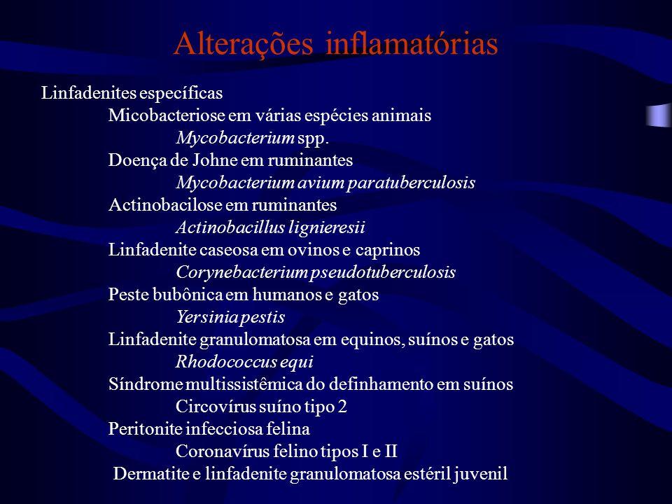Alterações progressivas Hiperplasia linfoide Hiperplasia linfoide típica Hiperplasia linfoide tipo folicular Hiperplasia linfoide tipo difusa (ou tipo paracortical) Hiperplasia linfoide tipo mista Hiperplasia atípica Hiperplasia linfoide folicular Neoplasia Linfoma Metástases