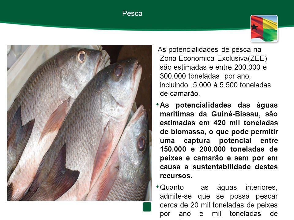 Pesca As potencialidades de pesca na Zona Economica Exclusiva(ZEE) são estimadas e entre 200.000 e 300.000 toneladas por ano, incluindo 5.000 à 5.500