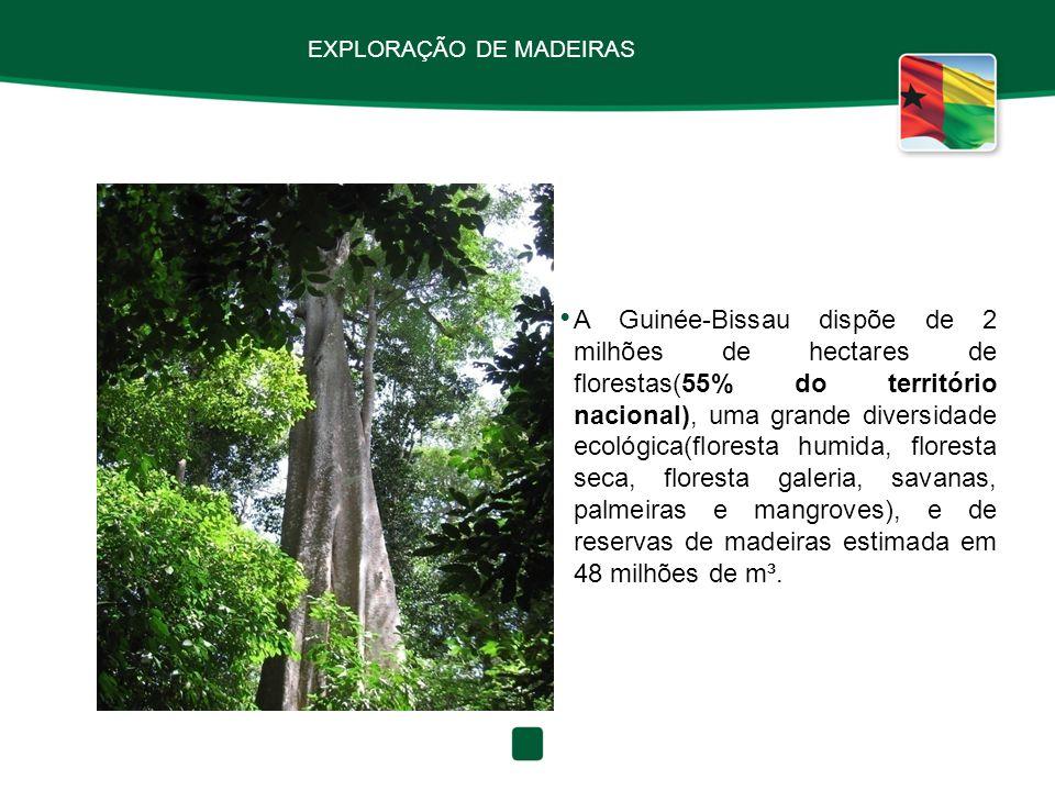 EXPLORAÇÃO DE MADEIRAS A Guinée-Bissau dispõe de 2 milhões de hectares de florestas(55% do território nacional), uma grande diversidade ecológica(flor