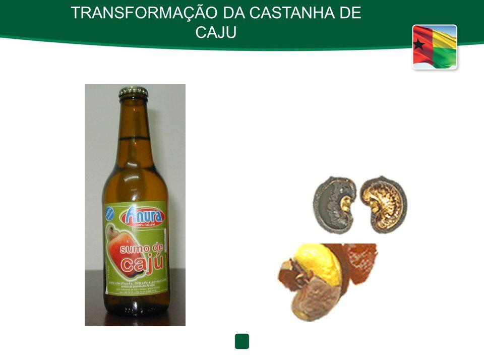 TRANSFORMAÇÃO DA CASTANHA DE CAJU