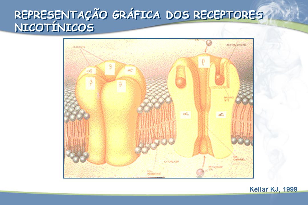 Kellar KJ, 1998 REPRESENTAÇÃO GRÁFICA DOS RECEPTORES NICOTÍNICOS