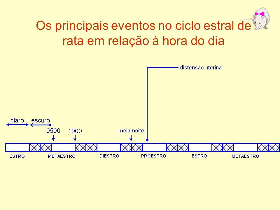 Os principais eventos no ciclo estral de rata em relação à hora do dia
