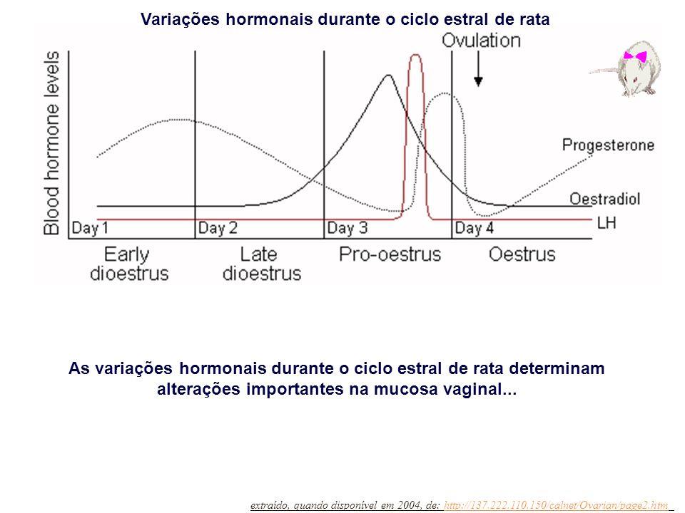 extraído, quando disponível em 2004, de: http://137.222.110.150/calnet/Ovarian/page2.htmhttp://137.222.110.150/calnet/Ovarian/page2.htm Diestro I Diestro IIProestroEstro Variações hormonais durante o ciclo estral de rata Esfregaço vaginal (HE) de rata nas fases do ciclo estral