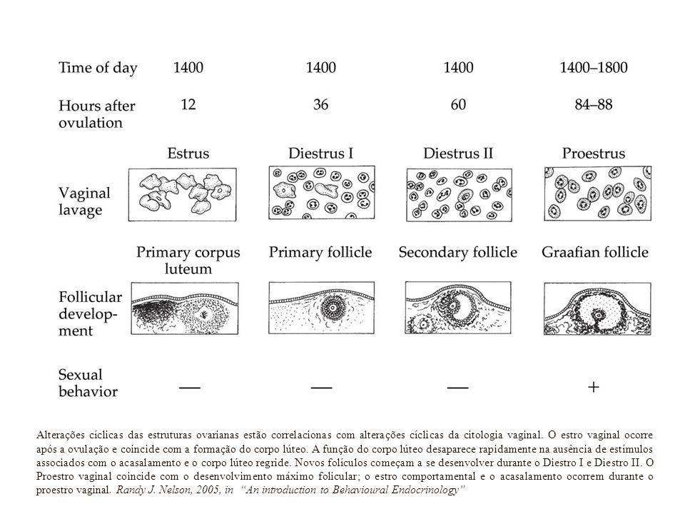 Alterações cíclicas das estruturas ovarianas estão correlacionas com alterações cíclicas da citologia vaginal. O estro vaginal ocorre após a ovulação