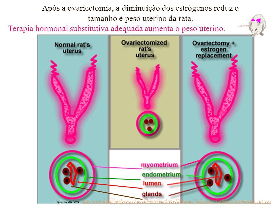 Após a ovariectomia, a diminuição dos estrógenos reduz o tamanho e peso uterino da rata. Terapia hormonal substitutiva adequada aumenta o peso uterino
