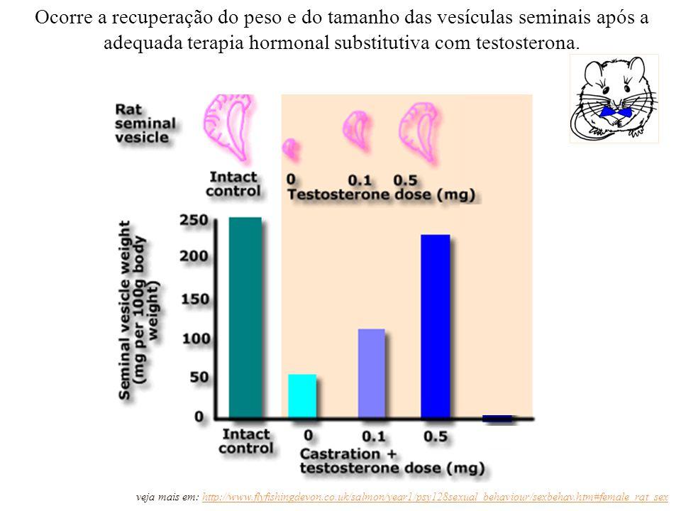Ocorre a recuperação do peso e do tamanho das vesículas seminais após a adequada terapia hormonal substitutiva com testosterona. veja mais em: http://