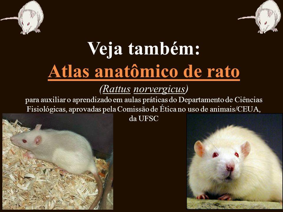 Veja também: Atlas anatômico de rato (Rattus norvergicus) para auxiliar o aprendizado em aulas práticas do Departamento de Ciências Fisiológicas, apro