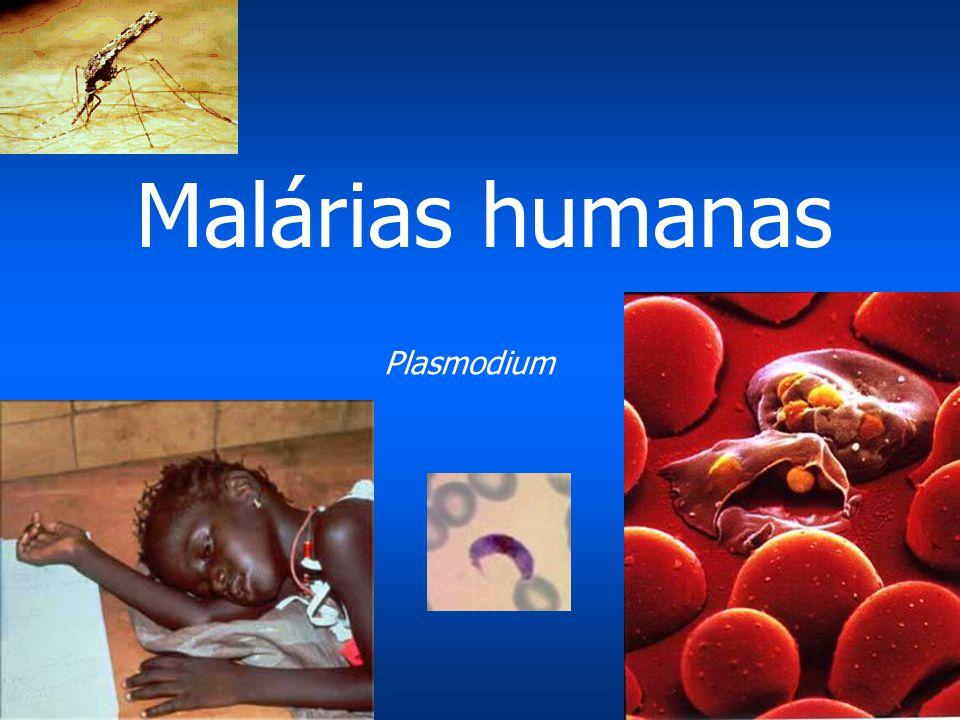 Malárias humanas Plasmodium