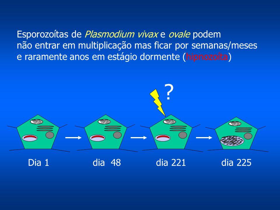 Esporozoítas de Plasmodium vivax e ovale podem não entrar em multiplicação mas ficar por semanas/meses e raramente anos em estágio dormente (hipnozoít