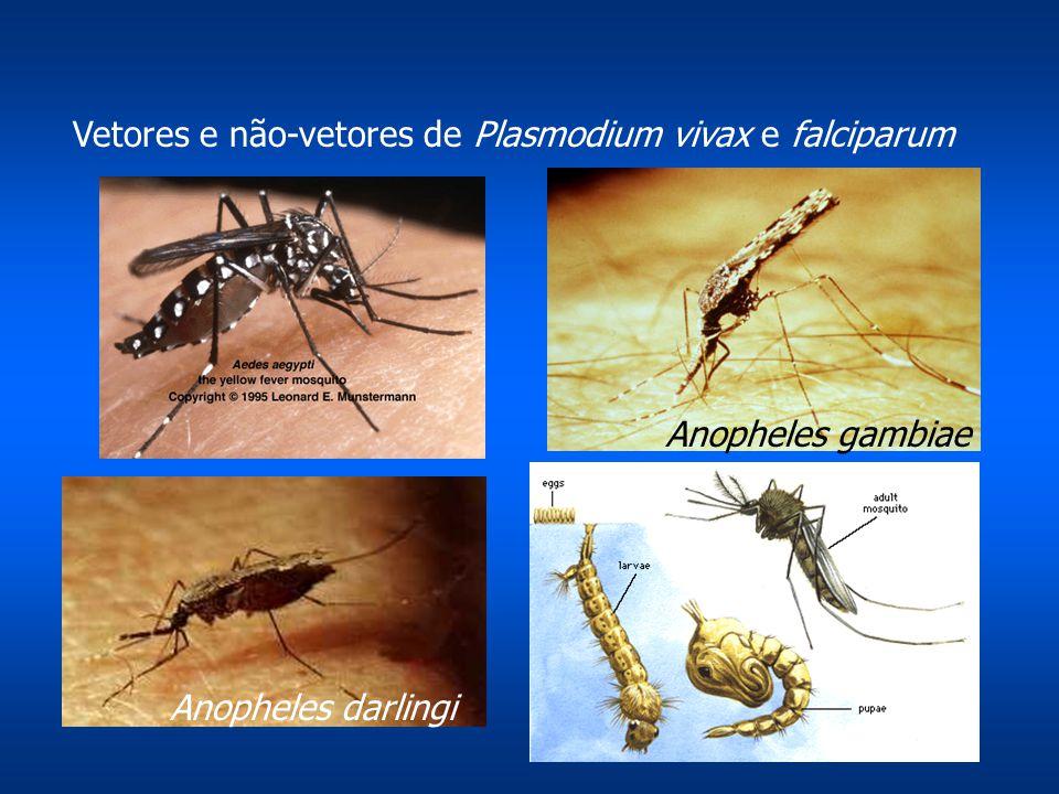 Vetores e não-vetores de Plasmodium vivax e falciparum Anopheles gambiae Anopheles darlingi