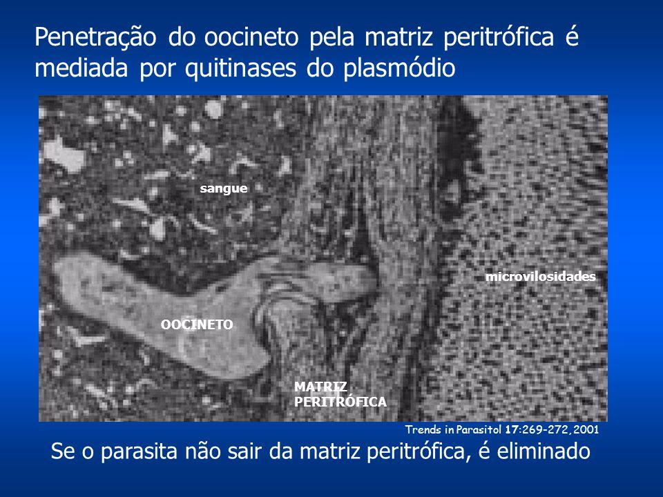 Penetração do oocineto pela matriz peritrófica é mediada por quitinases do plasmódio microvilosidades sangue OOCINETO MATRIZ PERITRÓFICA Trends in Par