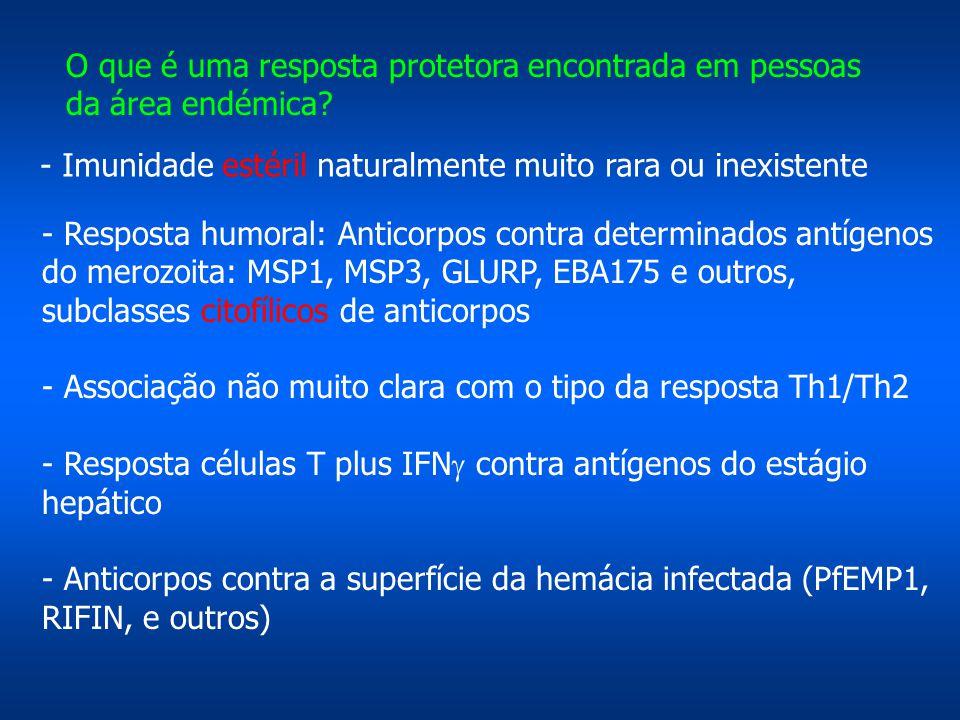 O que é uma resposta protetora encontrada em pessoas da área endémica? - Resposta humoral: Anticorpos contra determinados antígenos do merozoita: MSP1