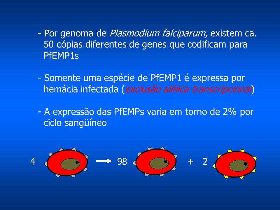 - Por genoma de Plasmodium falciparum, existem ca. 50 cópias diferentes de genes que codificam para PfEMP1s - Somente uma espécie de PfEMP1 é expressa