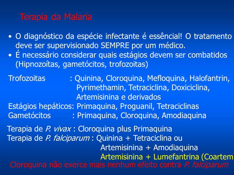 Terapia da Malaria O diagnóstico da espécie infectante é essêncial! O tratamento deve ser supervisionado SEMPRE por um médico. É necessário considerar