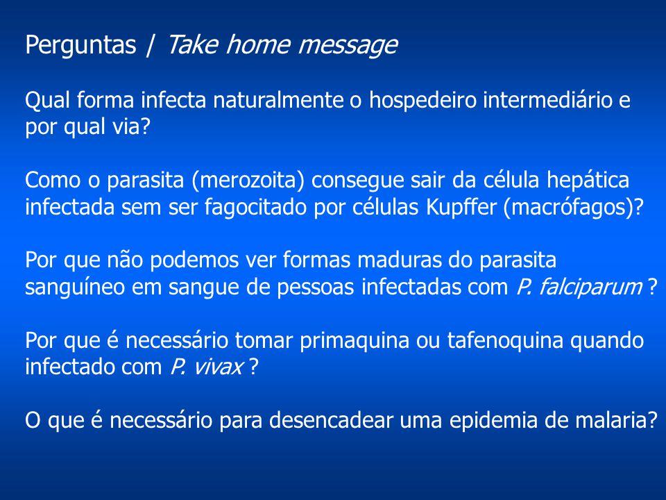 Perguntas / Take home message Qual forma infecta naturalmente o hospedeiro intermediário e por qual via? Como o parasita (merozoita) consegue sair da