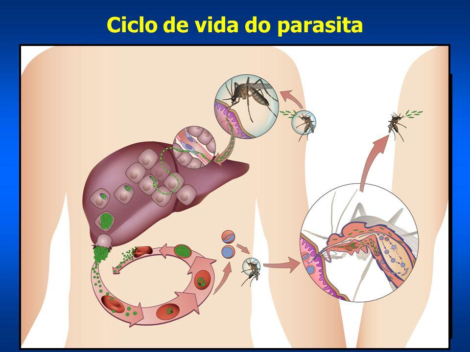 Curva de Parasitemia e febre de um paciente não-immune ---> Aquisição da imunidade protetora mas não esterilizante demora em torno de 5-10 anos (Staalsoe e Hviid, Parasitology Today 1998)