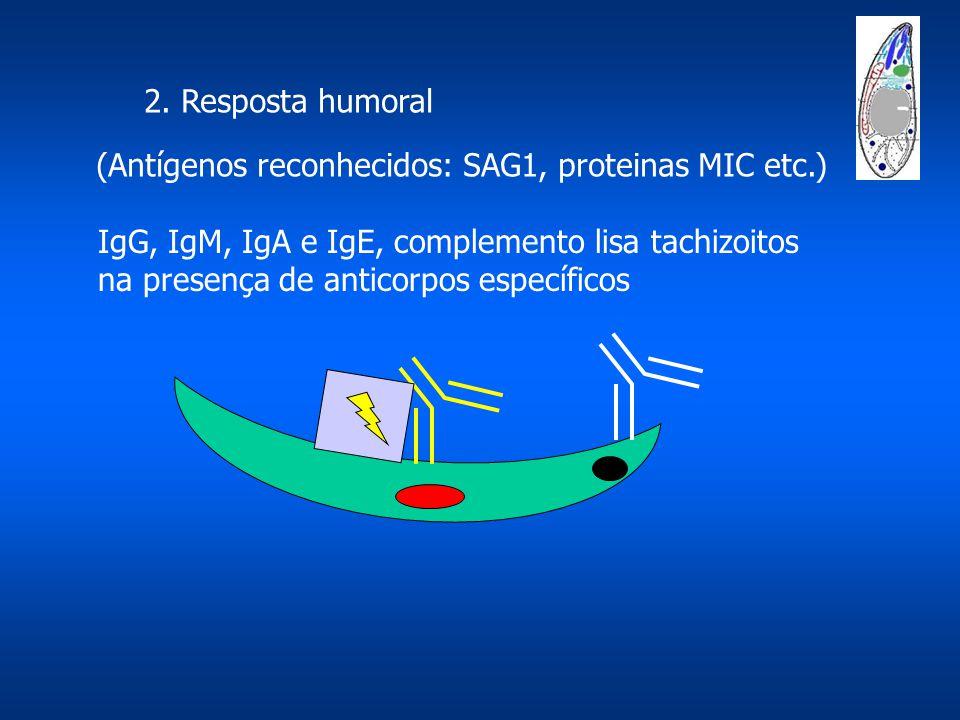 2. Resposta humoral (Antígenos reconhecidos: SAG1, proteinas MIC etc.) IgG, IgM, IgA e IgE, complemento lisa tachizoitos na presença de anticorpos esp