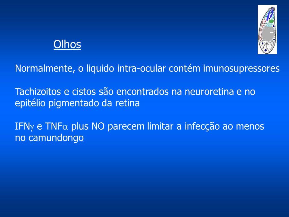 Olhos Normalmente, o liquido intra-ocular contém imunosupressores Tachizoitos e cistos são encontrados na neuroretina e no epitélio pigmentado da retina IFN  e TNF  plus NO parecem limitar a infecção ao menos no camundongo