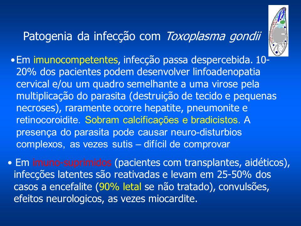 Patogenia da infecção com Toxoplasma gondii Em imunocompetentes, infecção passa despercebida. 10- 20% dos pacientes podem desenvolver linfoadenopatia