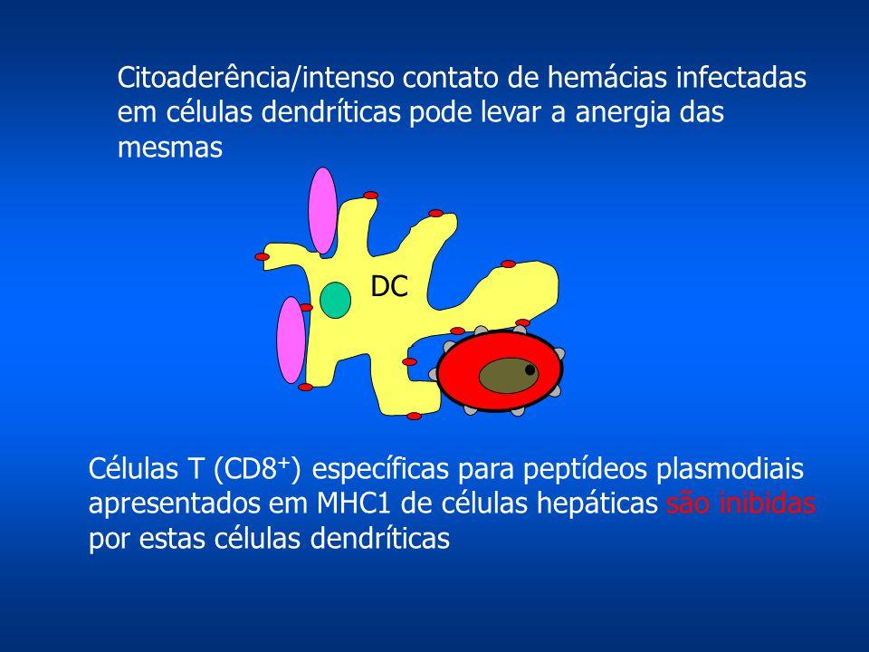Citoaderência/intenso contato de hemácias infectadas em células dendríticas pode levar a anergia das mesmas DC Células T (CD8 + ) específicas para peptídeos plasmodiais apresentados em MHC1 de células hepáticas são inibidas por estas células dendríticas
