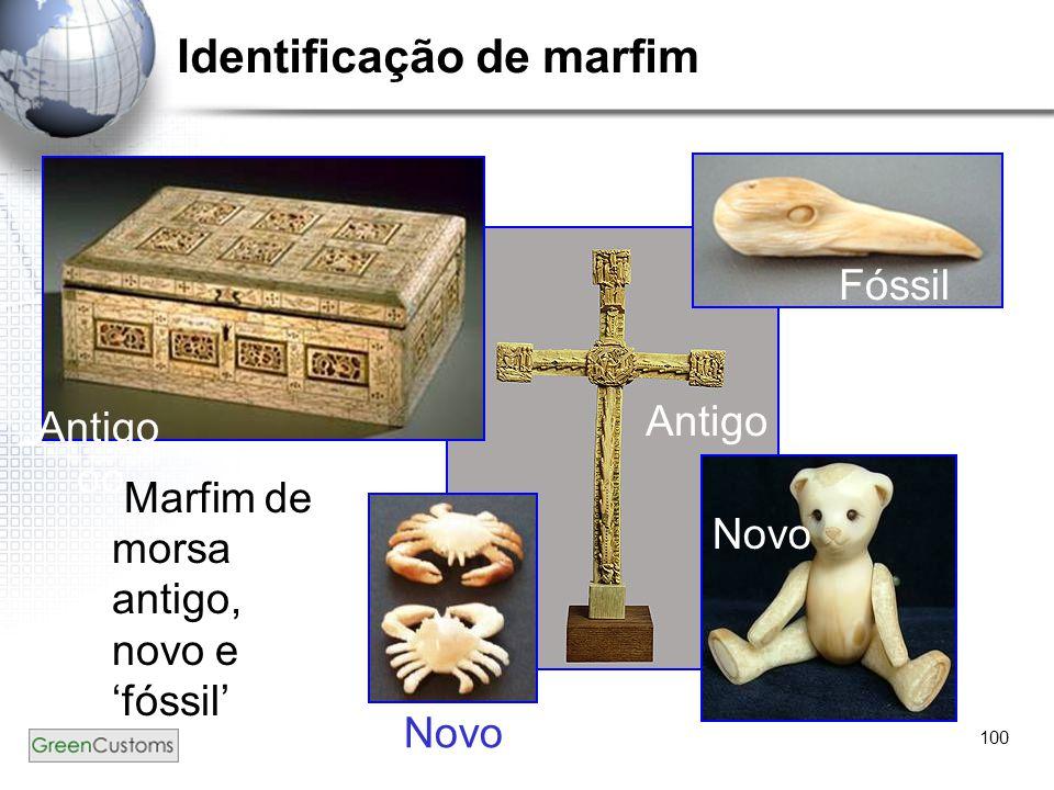 100 Identificação de marfim Marfim de morsa antigo, novo e 'fóssil' Fóssil Antigo Novo Antigo oo