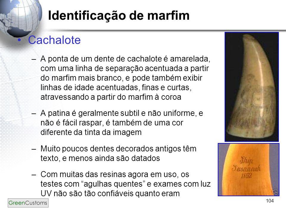 104 Identificação de marfim Cachalote –A ponta de um dente de cachalote é amarelada, com uma linha de separação acentuada a partir do marfim mais bran