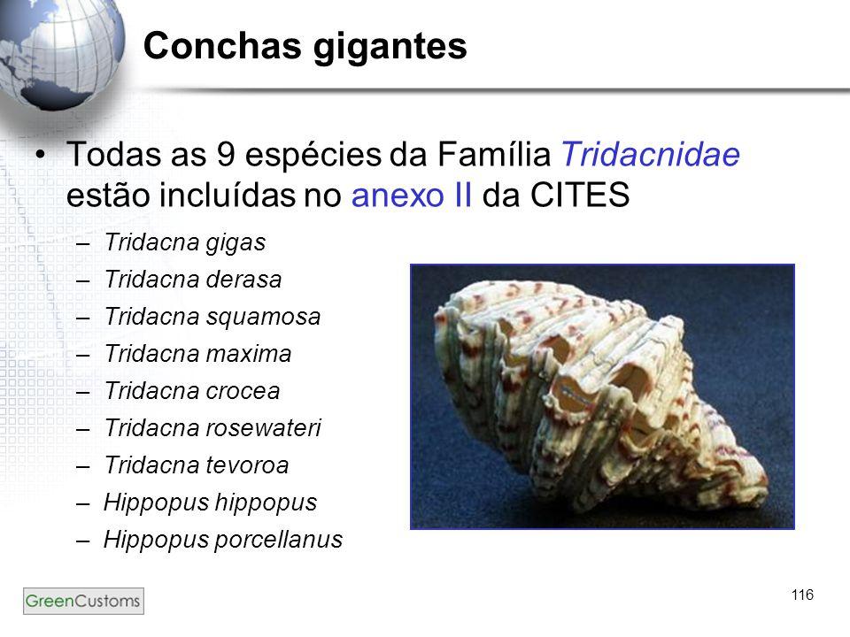 116 Conchas gigantes Todas as 9 espécies da Família Tridacnidae estão incluídas no anexo II da CITES –Tridacna gigas –Tridacna derasa –Tridacna squamo