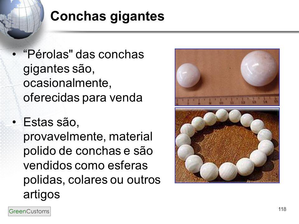 """118 Conchas gigantes """"Pérolas"""