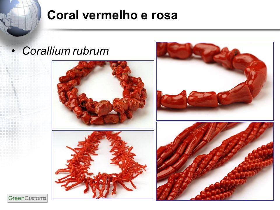 23 Coral vermelho e rosa Corallium rubrum