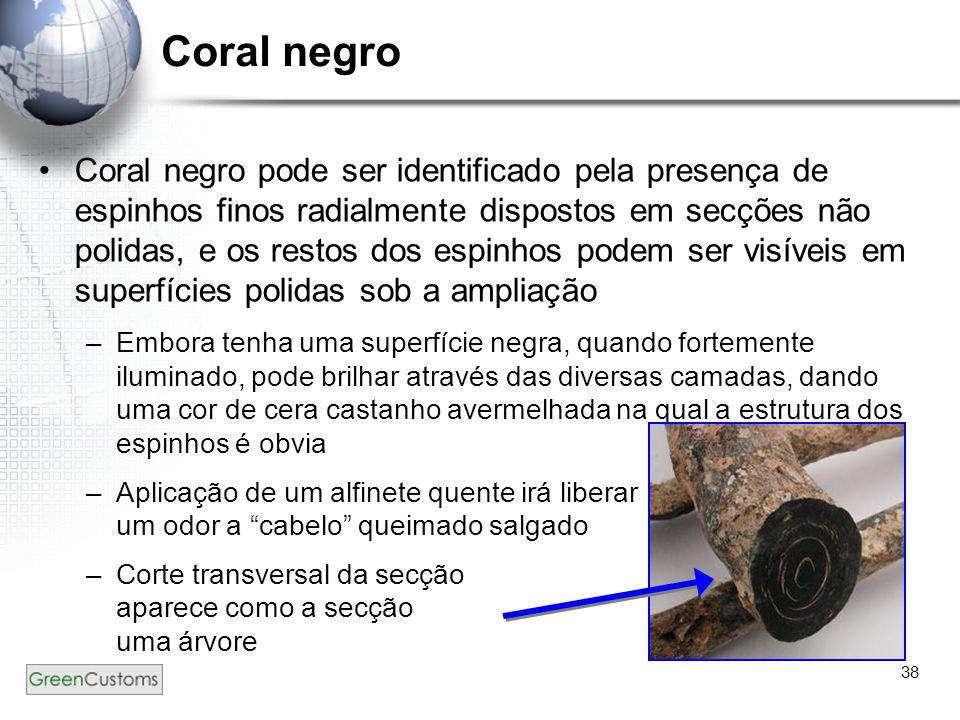 38 Coral negro Coral negro pode ser identificado pela presença de espinhos finos radialmente dispostos em secções não polidas, e os restos dos espinho