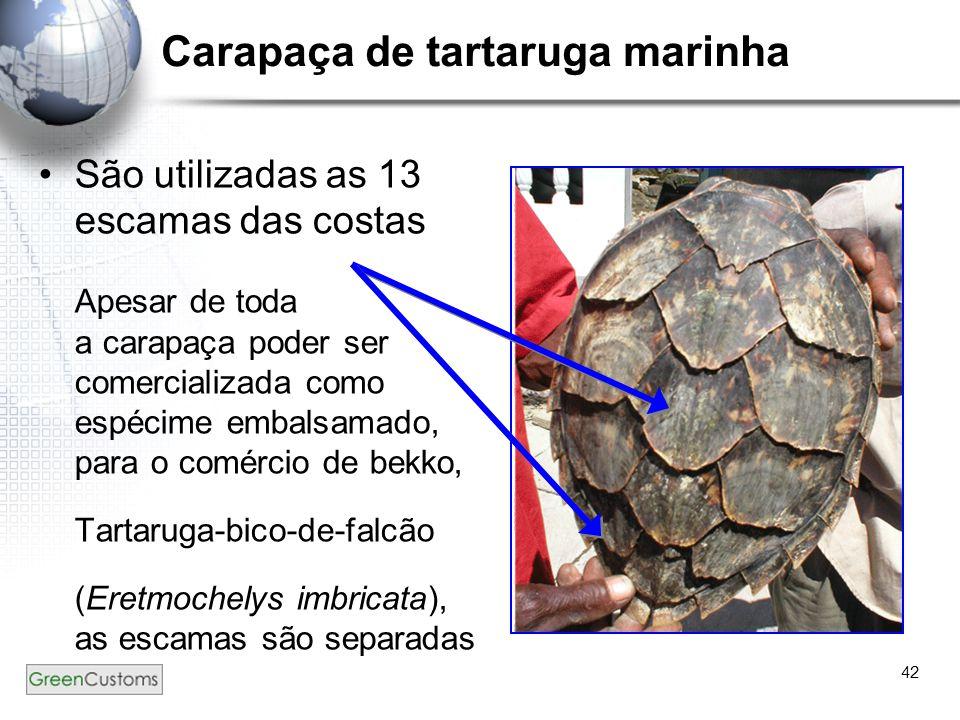 42 Carapaça de tartaruga marinha São utilizadas as 13 escamas das costas Apesar de toda a carapaça poder ser comercializada como espécime embalsamado,