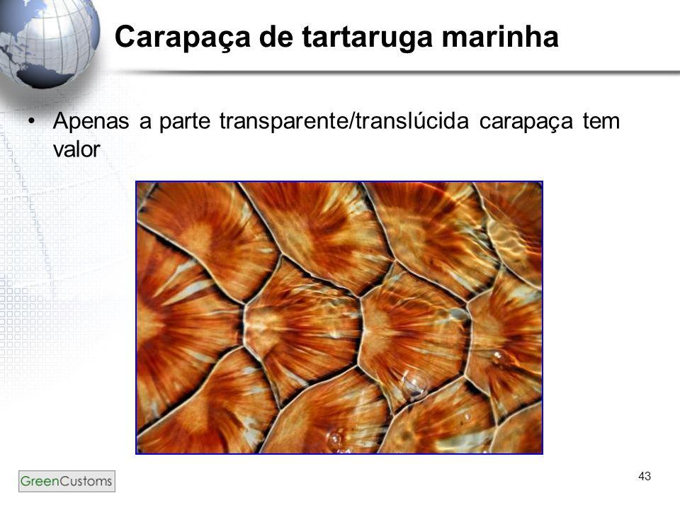43 Carapaça de tartaruga marinha Apenas a parte transparente/translúcida carapaça tem valor