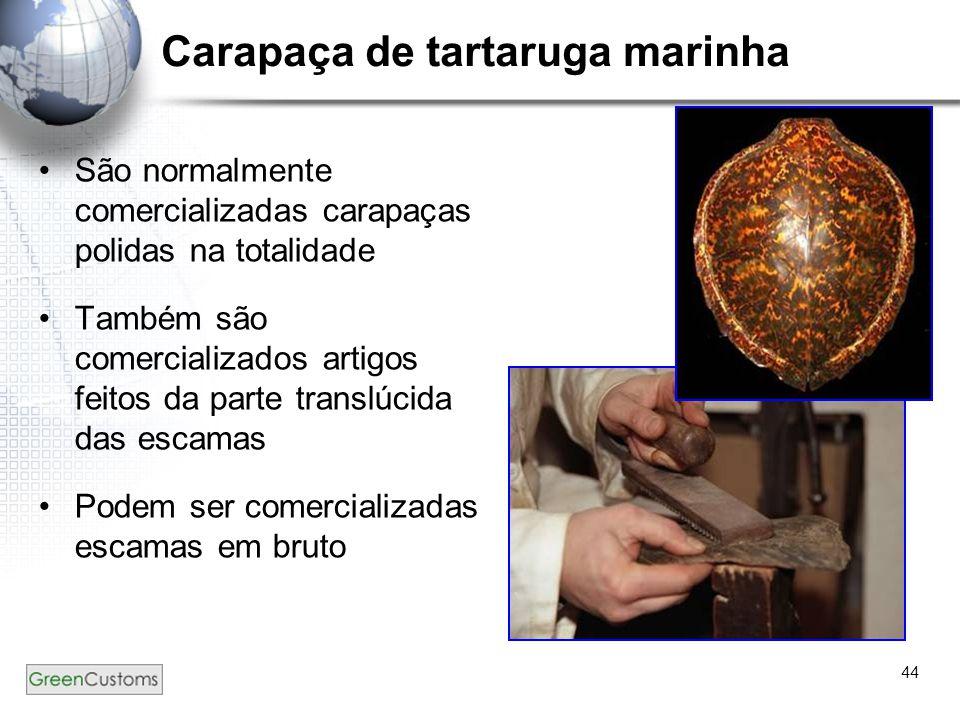44 Carapaça de tartaruga marinha São normalmente comercializadas carapaças polidas na totalidade Também são comercializados artigos feitos da parte tr