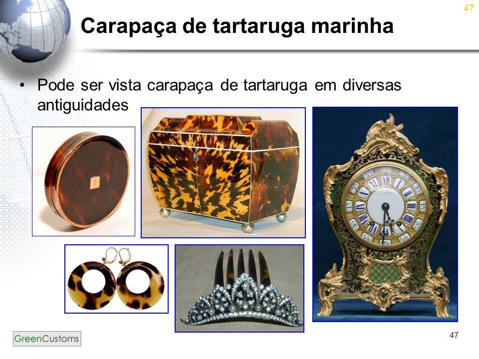 47 Carapaça de tartaruga marinha Pode ser vista carapaça de tartaruga em diversas antiguidades