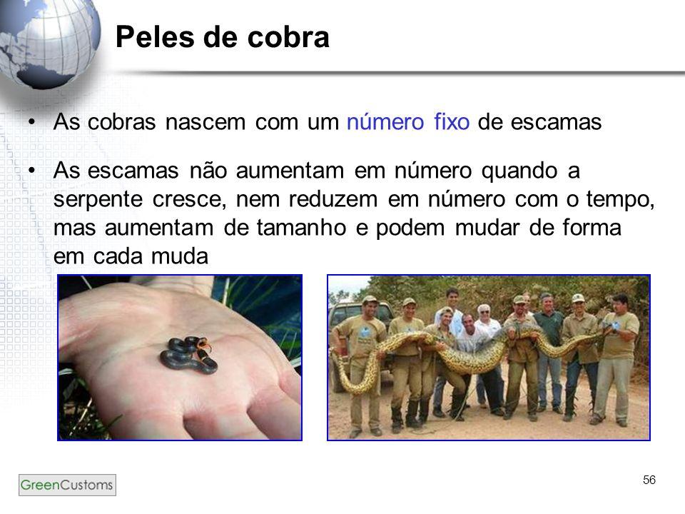 56 Peles de cobra As cobras nascem com um número fixo de escamas As escamas não aumentam em número quando a serpente cresce, nem reduzem em número com