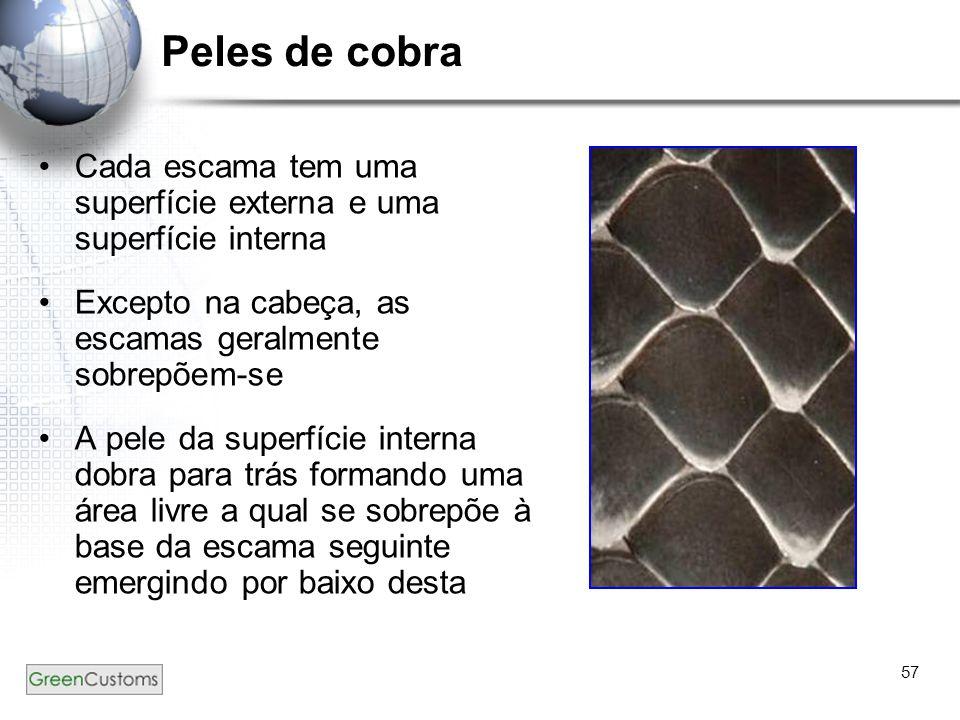 57 Peles de cobra Cada escama tem uma superfície externa e uma superfície interna Excepto na cabeça, as escamas geralmente sobrepõem-se A pele da supe