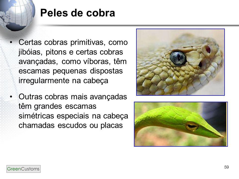 59 Peles de cobra Certas cobras primitivas, como jibóias, pitons e certas cobras avançadas, como víboras, têm escamas pequenas dispostas irregularment