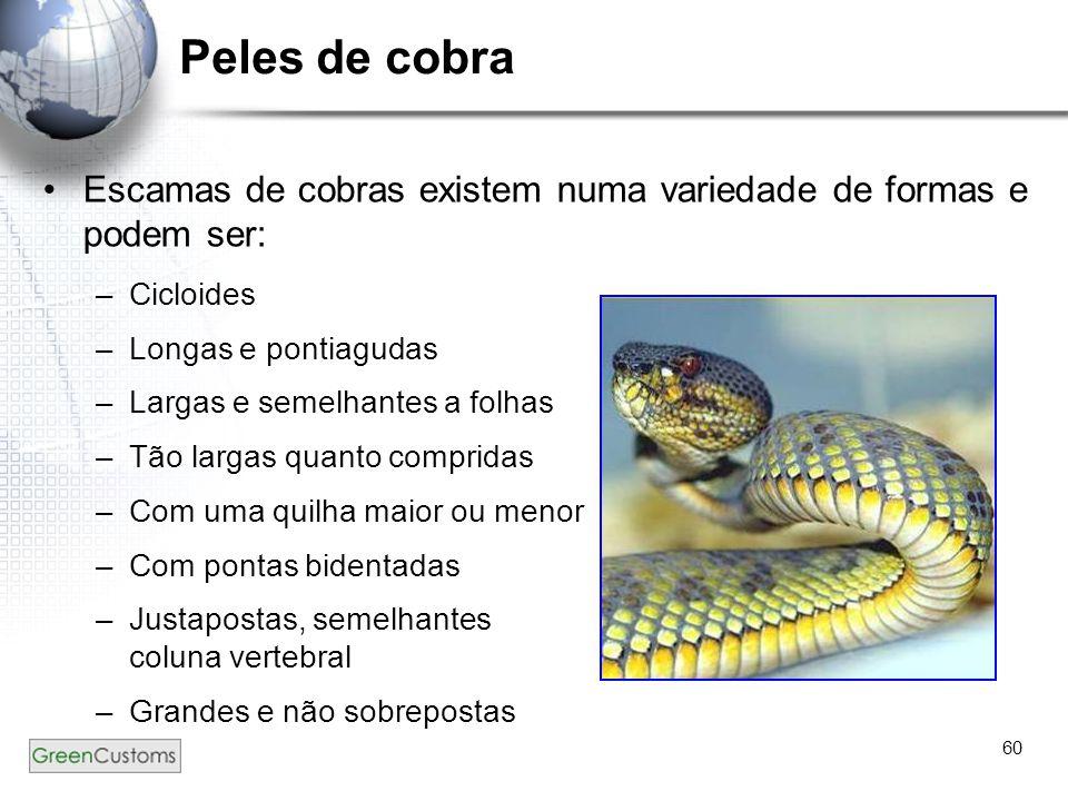 60 Peles de cobra Escamas de cobras existem numa variedade de formas e podem ser: –Cicloides –Longas e pontiagudas –Largas e semelhantes a folhas –Tão