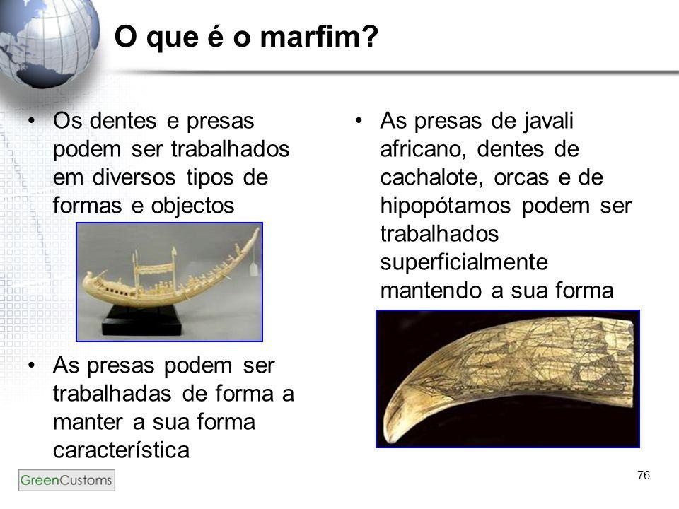 76 O que é o marfim? Os dentes e presas podem ser trabalhados em diversos tipos de formas e objectos As presas podem ser trabalhadas de forma a manter