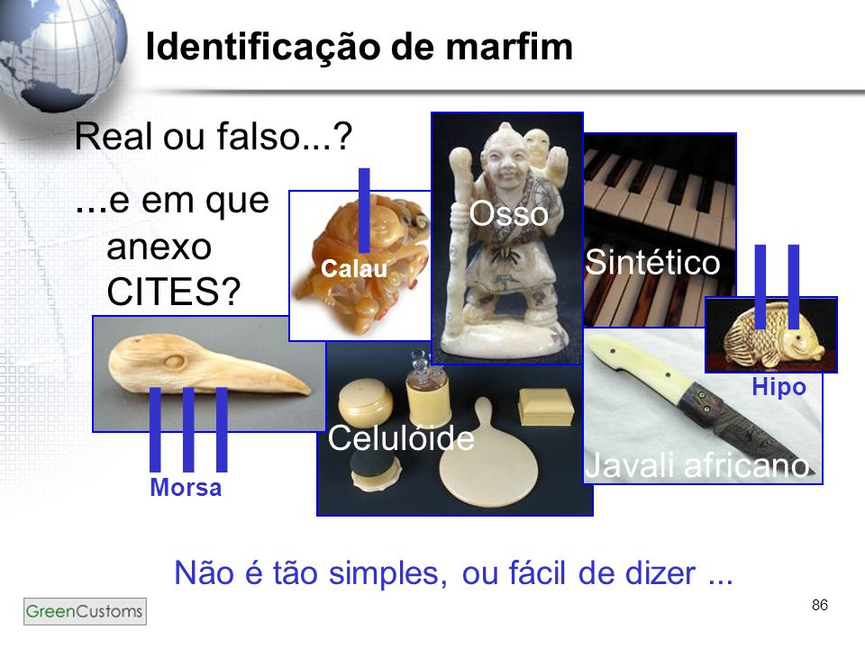 86 Real ou falso...? Não é tão simples, ou fácil de dizer... Identificação de marfim... e em que anexo CITES? Osso Celulóide Javali africano Sintético