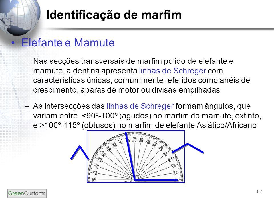 87 Identificação de marfim Elefante e Mamute –Nas secções transversais de marfim polido de elefante e mamute, a dentina apresenta linhas de Schreger c