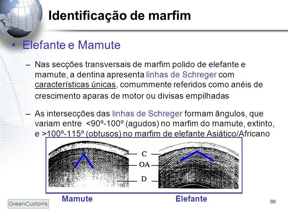 88 Identificação de marfim Elefante e Mamute –Nas secções transversais de marfim polido de elefante e mamute, a dentina apresenta linhas de Schreger c