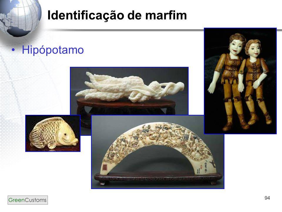 94 Identificação de marfim Hipópotamo