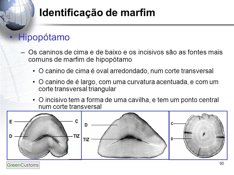 95 Identificação de marfim Hipopótamo –Os caninos de cima e de baixo e os incisivos são as fontes mais comuns de marfim de hipopótamo O canino de cima