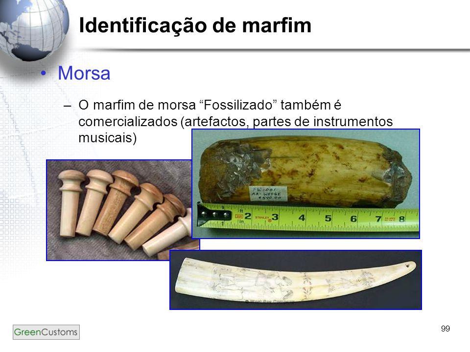 """99 Identificação de marfim Morsa –O marfim de morsa """"Fossilizado"""" também é comercializados (artefactos, partes de instrumentos musicais) –)"""