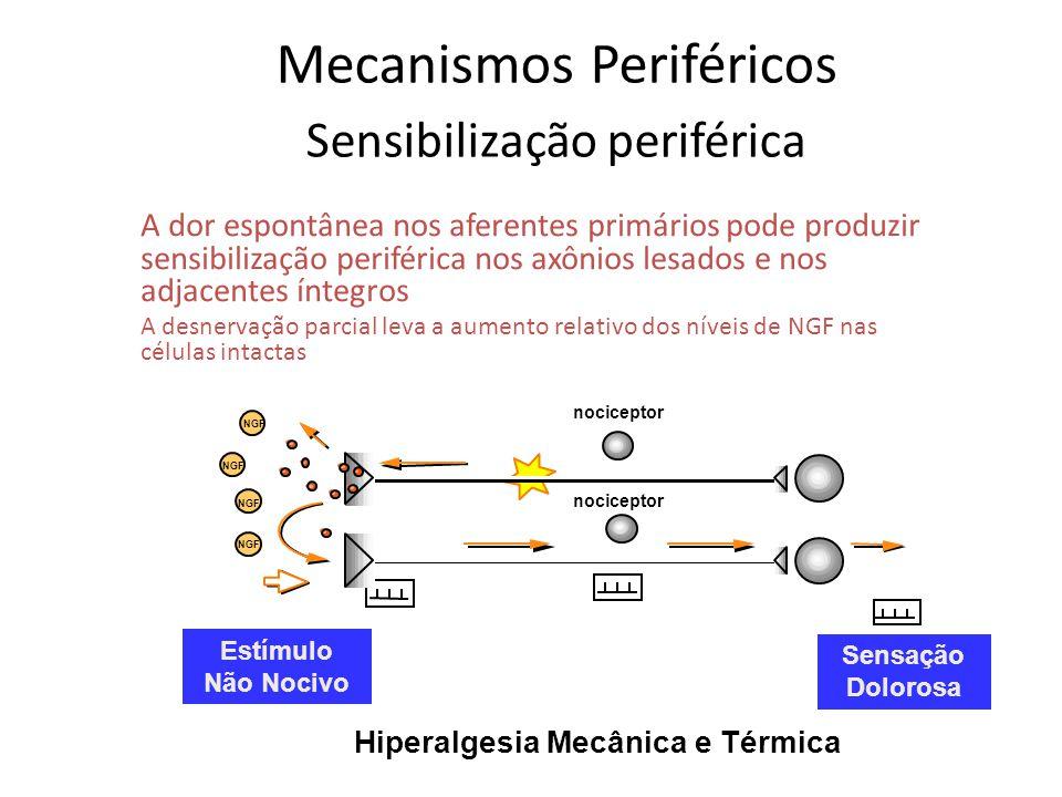 Mecanismos Periféricos Sensibilização periférica innocuous stimulus innocuous stimulus pain sensation pain sensation nociceptor NGF Estímulo Não Nociv